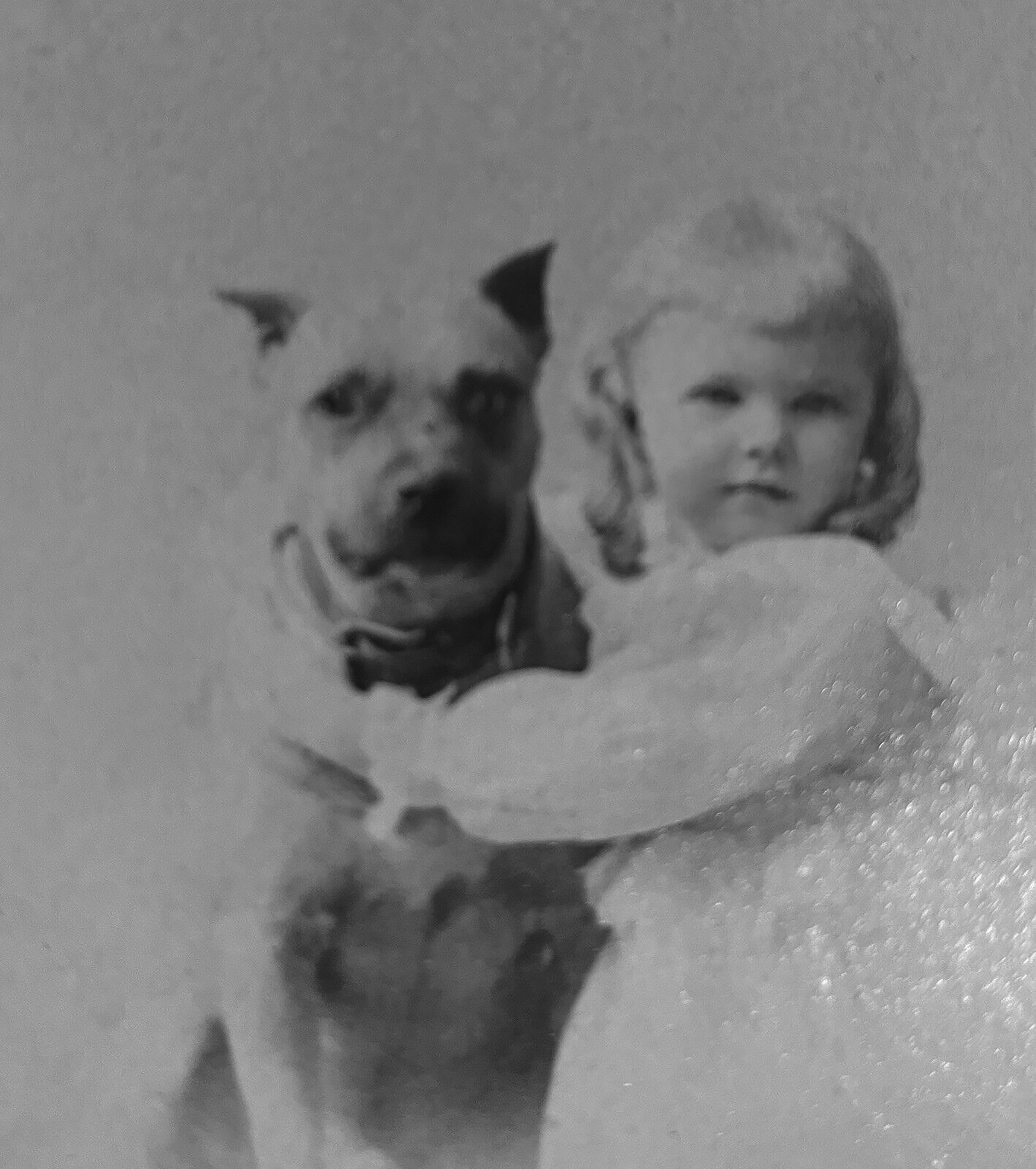 Pit Bull Dog & Young Girl in Troy NY c1892